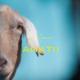 Watch Anatii's 'Ntloni' music video