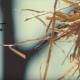 Dr Tumi's 'Wafika' music video reaches one million views